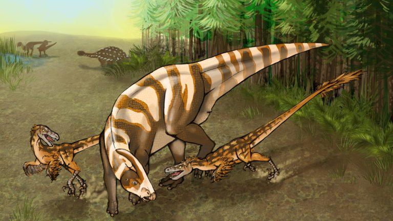 Two Saurornitholestes sullivani raptors attack a subadult hadrosaur Parasaurolophus tubicen.(Illustration by Mary P. Wiliams)