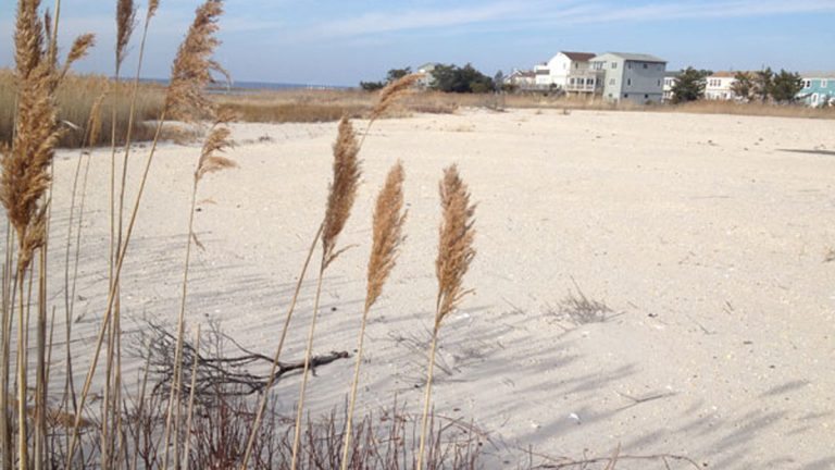 A section of beach and dunes in the Holgate section of Long Beach Township on Long Beach Island. (Image via NJ Spotlight)