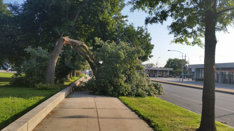 A downed tree in South Philadelphia's Marconi Plaza at Broad and Oregon (Peter Crimmins/WHYY)