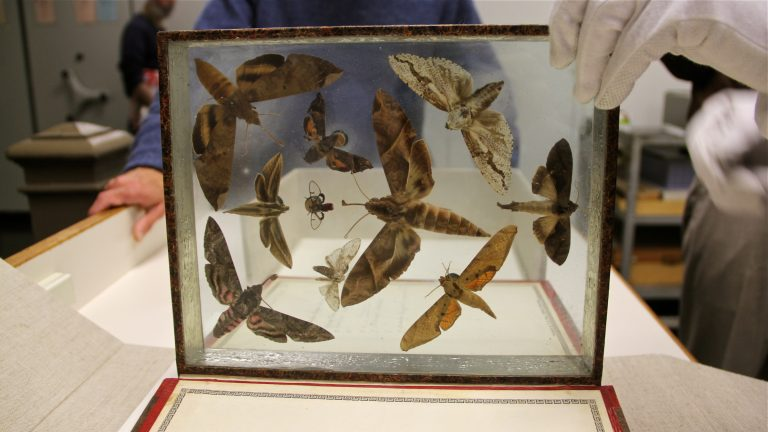 These moths are certainly thinking inside the box — Titian Peale collected them from all over the world and arranged them artistically in sealed glass cases in 'books.' (Emma Lee/WHYY)