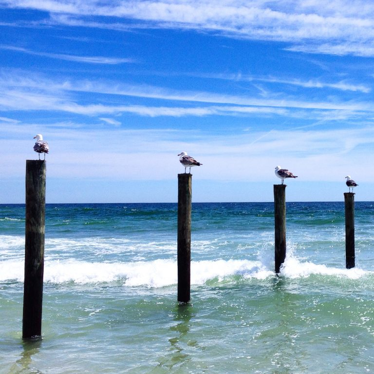 Seagulls resting on the pilings that once supported Funtown Pier in Seaside Park on June 20, 2014. The pier was deemed unsafe after Superstorm Sandy then destroyed by the boardwalk fire in September 2013. (Justin Auciello/for NewsWorks)