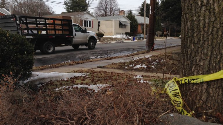 Caution tape remains at the site of a Thursday night hit-and-run on Domino Lane in Roxborough. (Brian Hickey/WHYY)