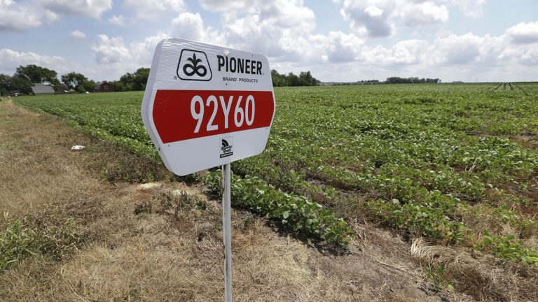 A DuPont Pioneer seed sign is placed in a bean field in Iowa. (AP Photo/Charlie Neibergall, File)
