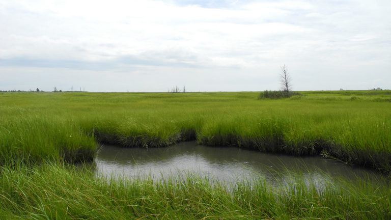The so-called bottom of the world, where Cumberland County marshes line the Delaware Bay. (Tracey Samuelson/for NewsWorks)