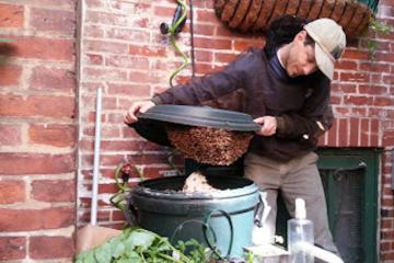 Adam Schreiber collects a swarm. (Photo courtesy of Adam Schreiber)