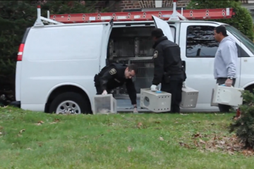 Cats are removed from the childhood home of Grace Kelly last Halloween. (Matthew Grady/WHYY)