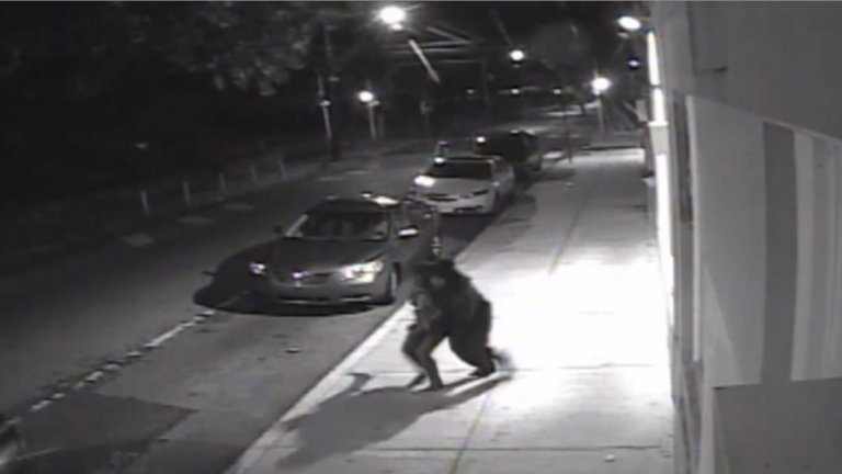 Surveillance footage of Sunday night's brazen abduction on West Coulter Street in Germantown's Penn-Knox section. (Photo courtesy of Philadelphia Police)