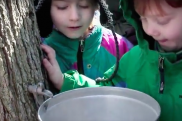 Check out the maple sugaring festival on Sunday. (NewsWorks file photo)