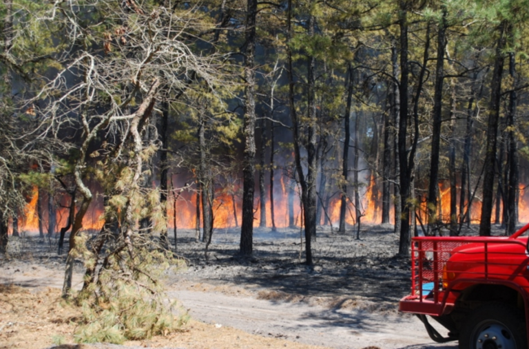 A wildfire in Wharton State Forest in April 2016. (Photo: John H. Rieth/NJFFS)