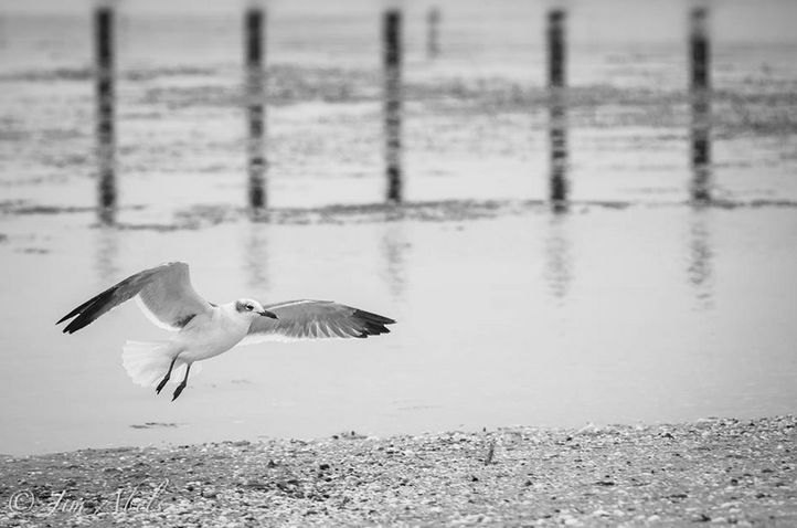 A lone gull on a gloomy day at the Belmar Marina. (Photo by Jim Abels Photography)