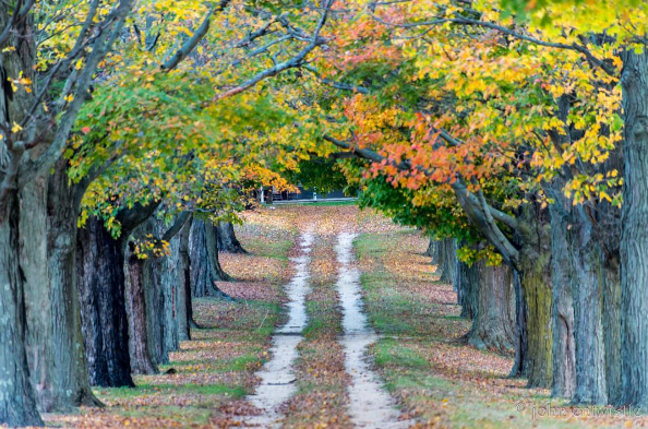 Autumn colors down a tree lined road at the Jersey Shore. (Photo: John Entwistle Photography)