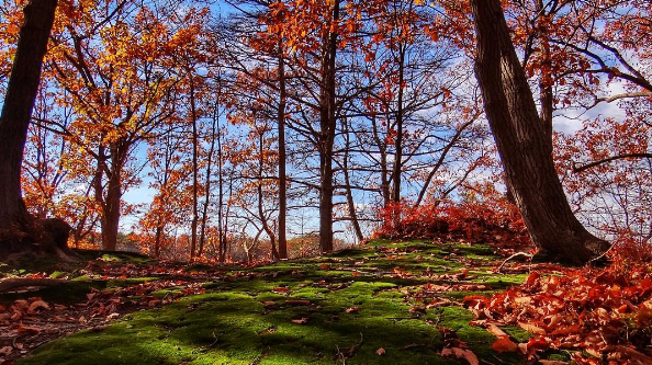 A recent autumnal scene in Cheesequake State Park by dawns_eye_view as tagged #JSHN on Instagram.