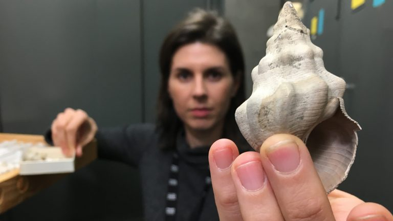 Jann Vendetti holding the shell of a snail known as