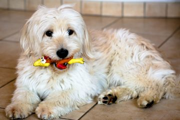 Pa. adds teeth to law regulating kennel conditions (<a href=