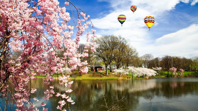 The Cherry Blossom Festival in Branch Brook Park, Essex County, is one of the reasons New Jersey residents like where they live. (<a href=