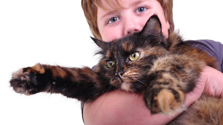 (<a href='http://www.shutterstock.com/pic-222108742/stock-photo-cute-blond-boy-with-a-cat-focus-is-on-the-cat-isolated-over-white-background.html'>Boy hugging cat</a> image courtesy of Shutterstock.com)