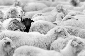 (<a href='http://www.shutterstock.com/pic-105830144/stock-photo-one-black-sheep-in-the-herd-of-whites.html?src=csl_recent_image-1'>Image courtesy of Shutterstock.com</a>)