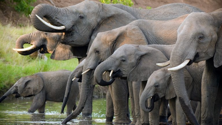 """(<a href=""""http://www.shutterstock.com/s/herd,of,elephants/search.html?page=2&thumb_size=mosaic&inline=52862459"""