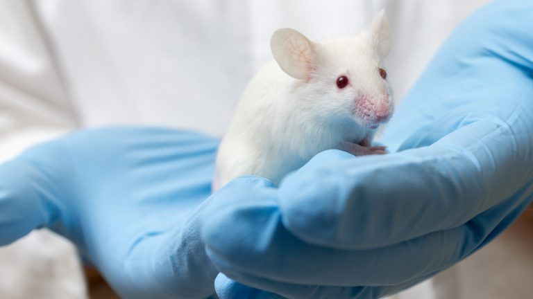 "(<a href=""www.shutterstock.com/pic-210003694/stock-photo-scientist-holding-white-laboratory-mouse-mus-musculus-in-hands.html?src=E26z9IUArE8n06WusbHIwg-1-35"">Photo</a> via ShutterStock)"