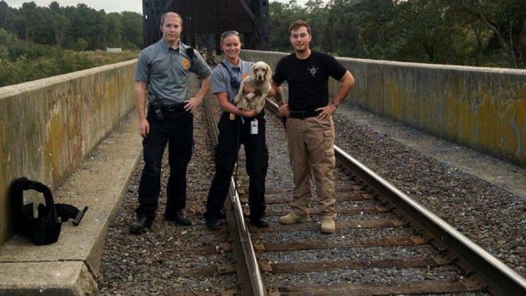 (photo courtesy Delaware Animal Services)