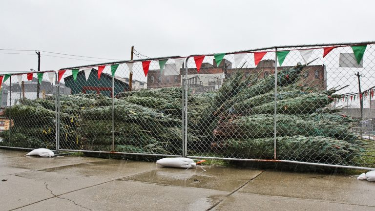 A lot in Philadelphia's Northern Liberties neighborhood is the site of Christmas trees on sale before Thanksgiving. (Kimberly Paynter/WHYY)