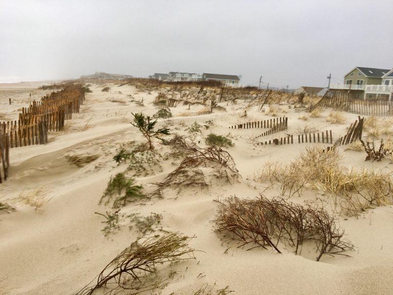 Newly placed Christmas trees buried in South Seaside Park dunes amid a nor'easter in 2017. (Image courtesy of Dominick Solazzo)