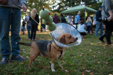 Chase, a beagle labrador, won first place for being a dog-tini at a costume party and contest for dogs in East Falls' McMichael Park on Saturday afternoon. The gathering benefited the East Falls Dog Park organization.