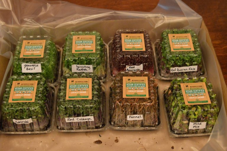 Some of the greens grown in Philadelphia. (Tom MacDonald/WHYY)