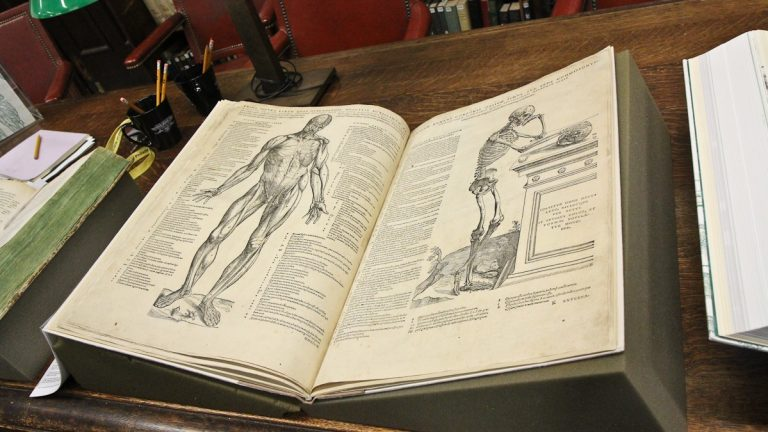 Andreas Vesalius published 'De humani corporis fabrica' in 1543. (Kimberly Paynter/WHYY)