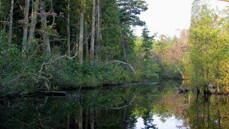 The Mullica River runs through South Jersey. (Mullica River 5 licensed under Creative Commons via WikiMedia)