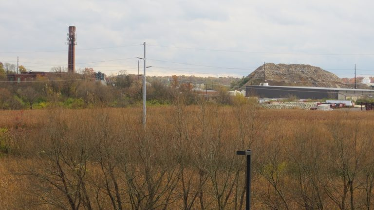 The future site of the 20-acre Southbridge wetland (Shirley Min/WHYY)