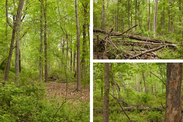 woodsbest