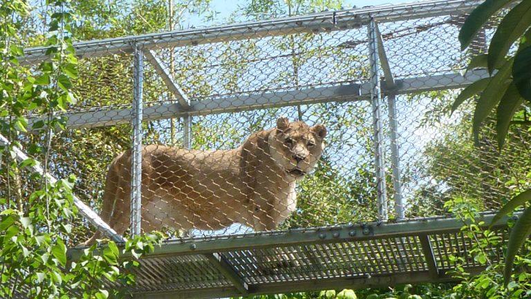 Philly Zoo's Zenda