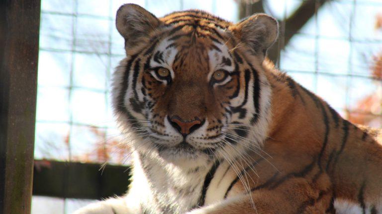 (photo courtesy Brandywine Zoo)