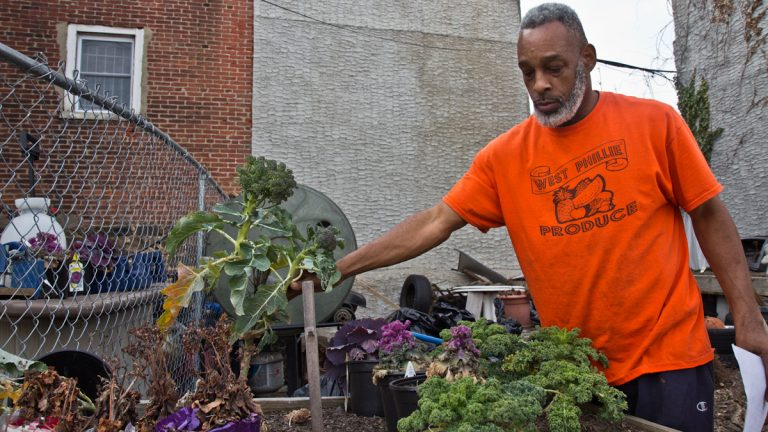 Owner Arnett Woodall examines broccoli plants next to West Phillie Produce. (Kimberly Paynter/WHYY)