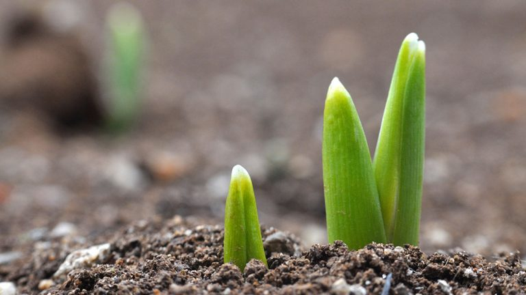 Plants got an early start in New Jersey. (Big Stock file photo)