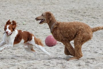 Dogs run off-leash on the dog beach in Egg Harbor Township. (Bill Barlow/for WHYY)