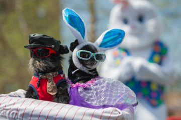 Noodle (left) and Diva, owned by Anthony Smith, won the best-dressed pet category. (Jonathan Wilson for Newsworks)