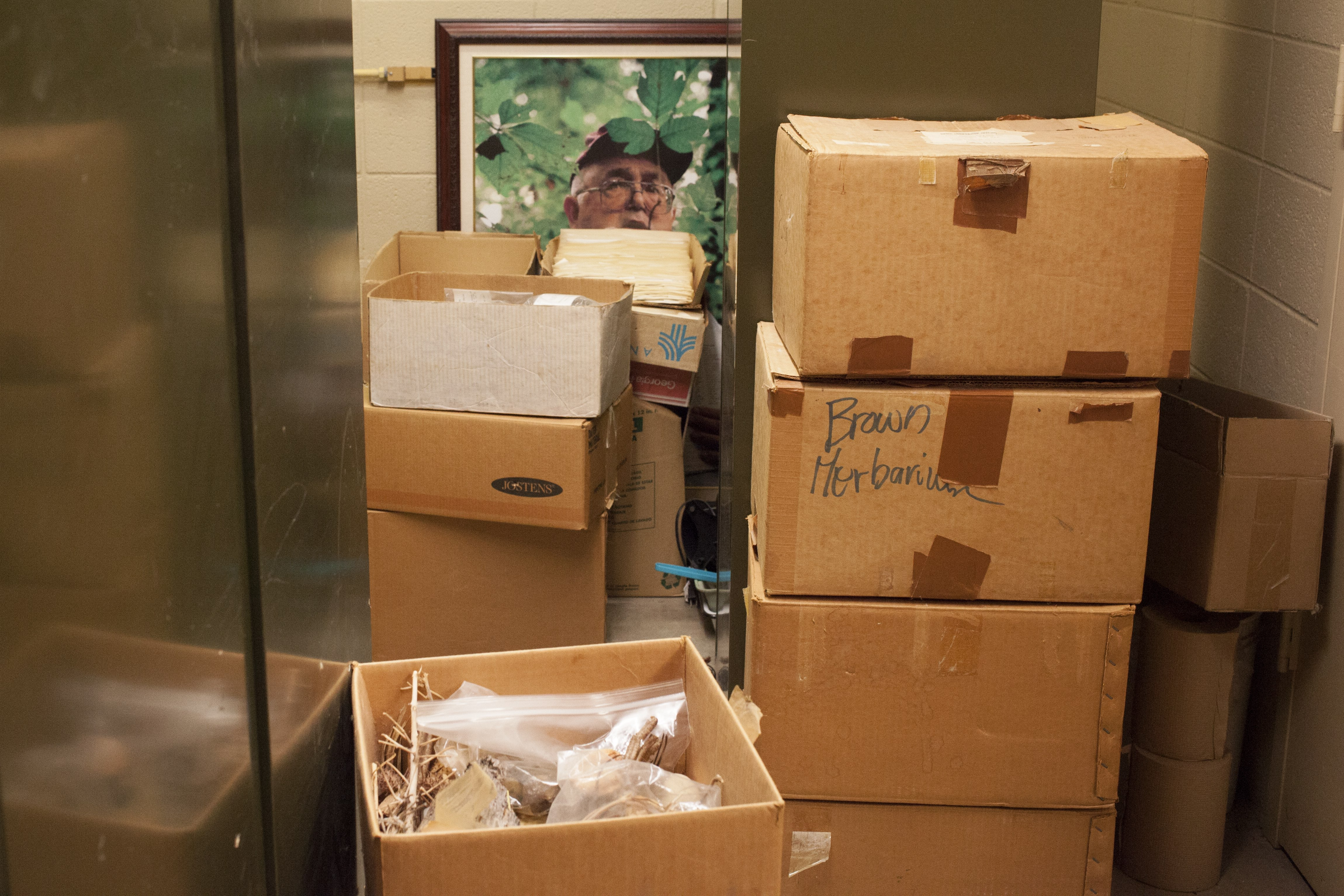 A portrait of Dale Thomas, who collected much of the ULM herbarium, sits behind boxes days before the collection was transferred to the Botanical Research Institute, in Texas. (Irina Zhorov/The Pulse)