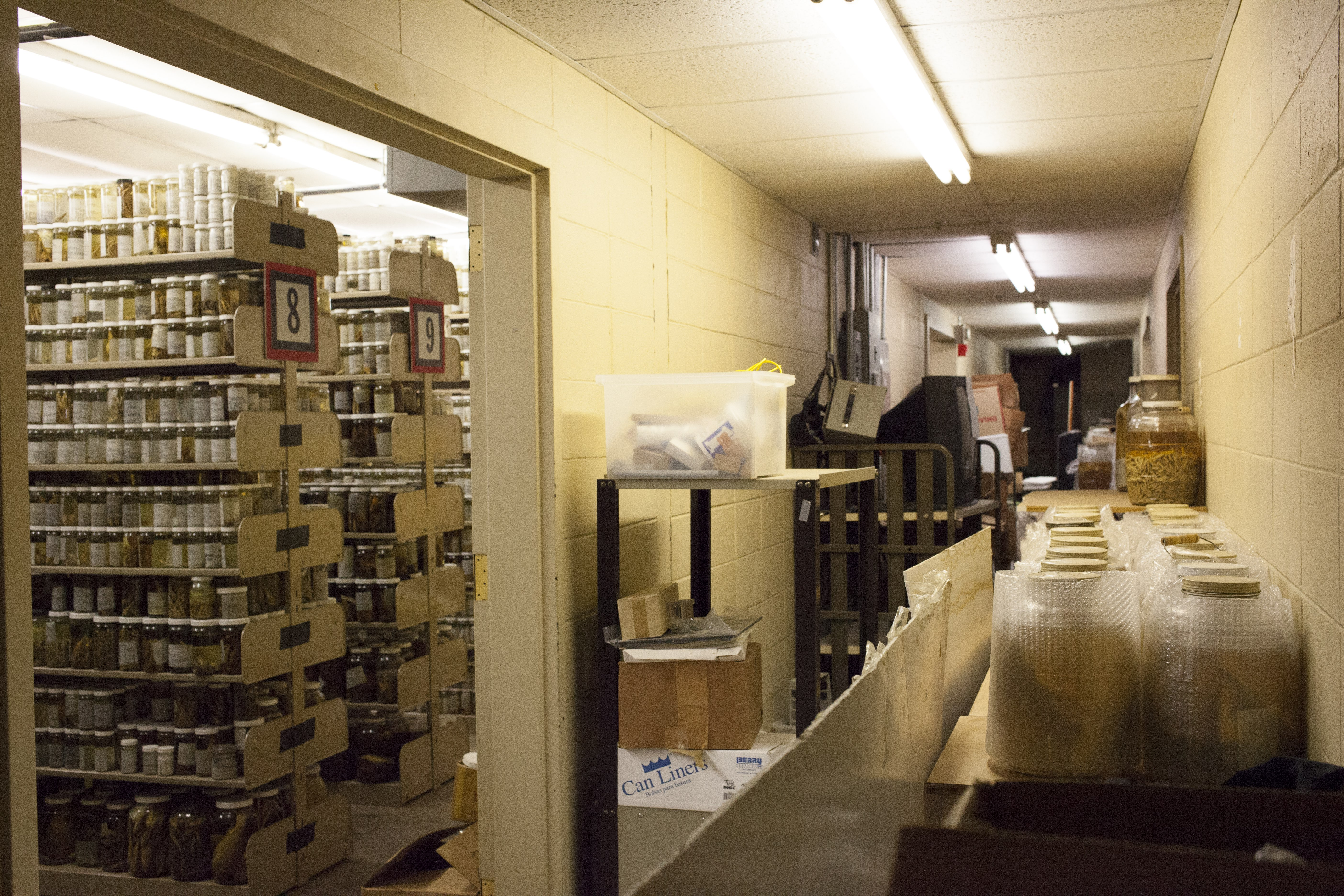 The ULM fish collection at its location in an old athletic facility, where it has been stored for the past five years. (Irina Zhorov/The Pulse)