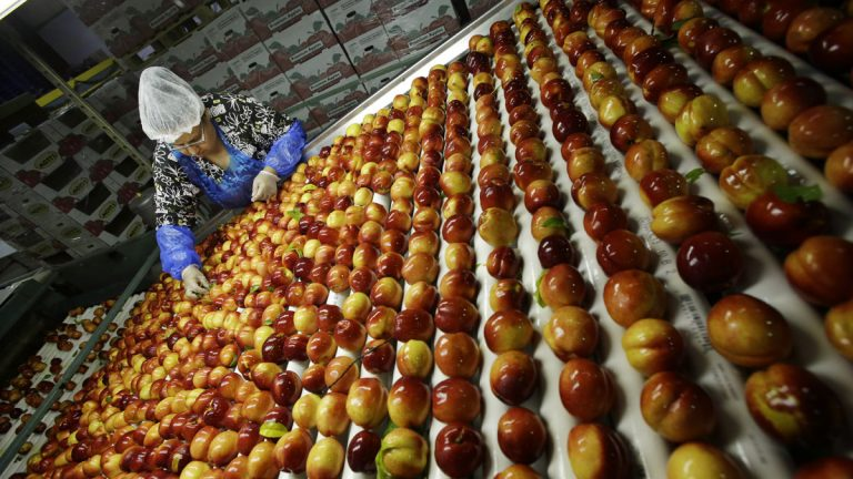 A worker removes leaves as nectarines get sorted for packaging at Eastern ProPak Farmers Cooperative in Glassboro, New Jersey. It's estimated up to 40 percent of all food produced in the U.S. is wasted. (AP file photo)