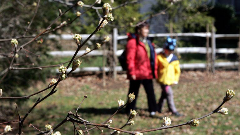 Tree buds like these are seen in Trenton, N.J., in this AP file photo. That dreaded harbinger of spring, allergy season, has arrived, and for people already suffering from watery eyes, sniffles and cough. (Mel Evans/AP Photo, file)