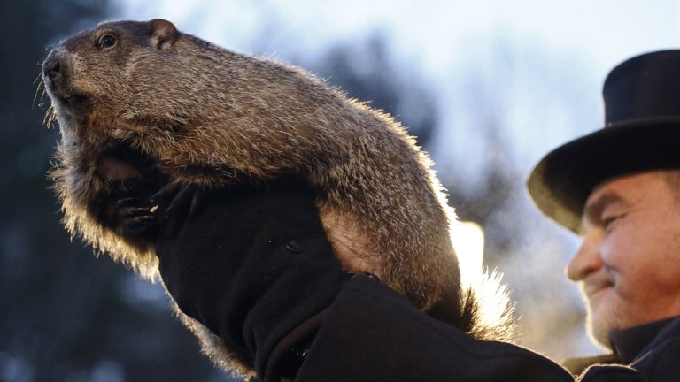 Groundhog Club co-handler John Griffiths holds Punxsutawney Phil during the annual celebration of Groundhog Day on Gobbler's Knob in Punxsutawney, Pa., Tuesday, Feb. 2, 2016. The handlers say the furry rodent has failed to see his shadow, meaning he's 'predicted' an early spring. (Keith Srakocic/AP Photo)