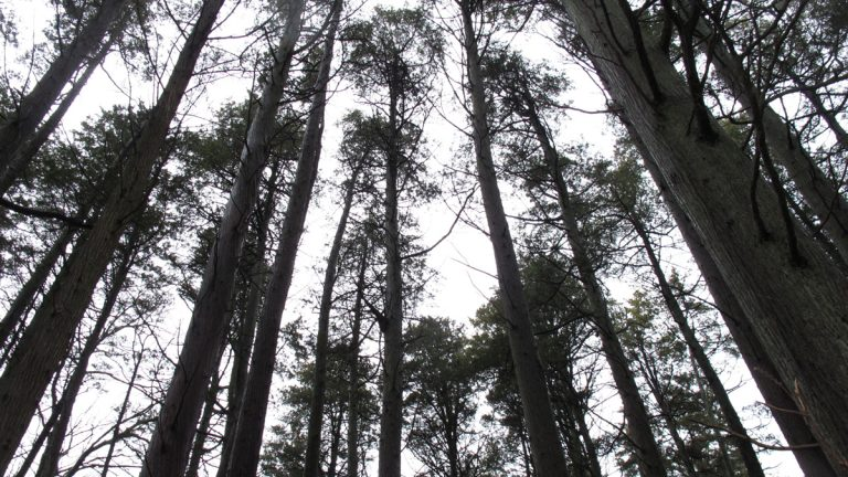 This Jan. 6, 2014 photo shows a section of the Pinelands region in Lakehurst N.J. (Wayne Parry/AP Photo)