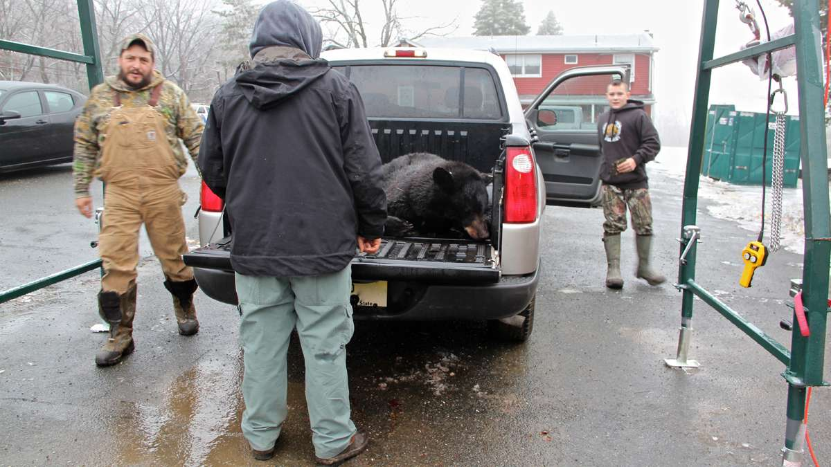 Bummer Cronk and his son, Hunter, arrive at the Green Pond bear check station with a double kill. (Emma Lee/for NewsWorks)