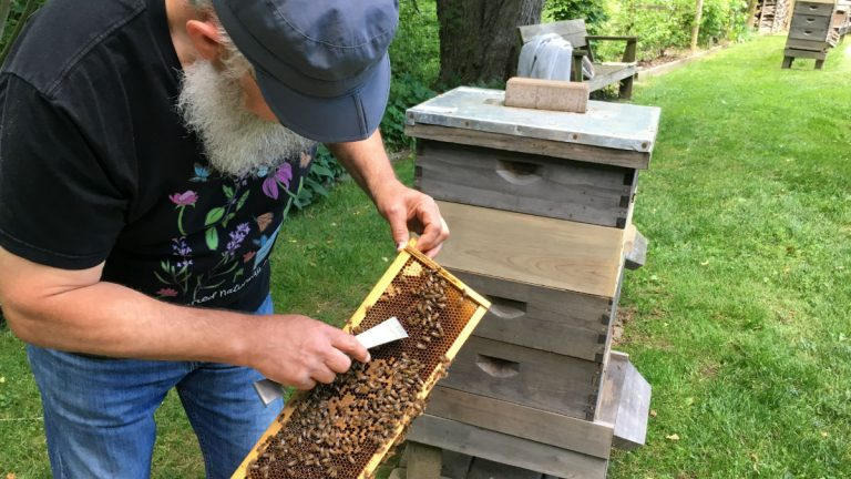 Newark beekeeper Ray Walker inspects bees in his backyard apiary near White Clay Creek State Park. (Mark Eichmann/WHYY)