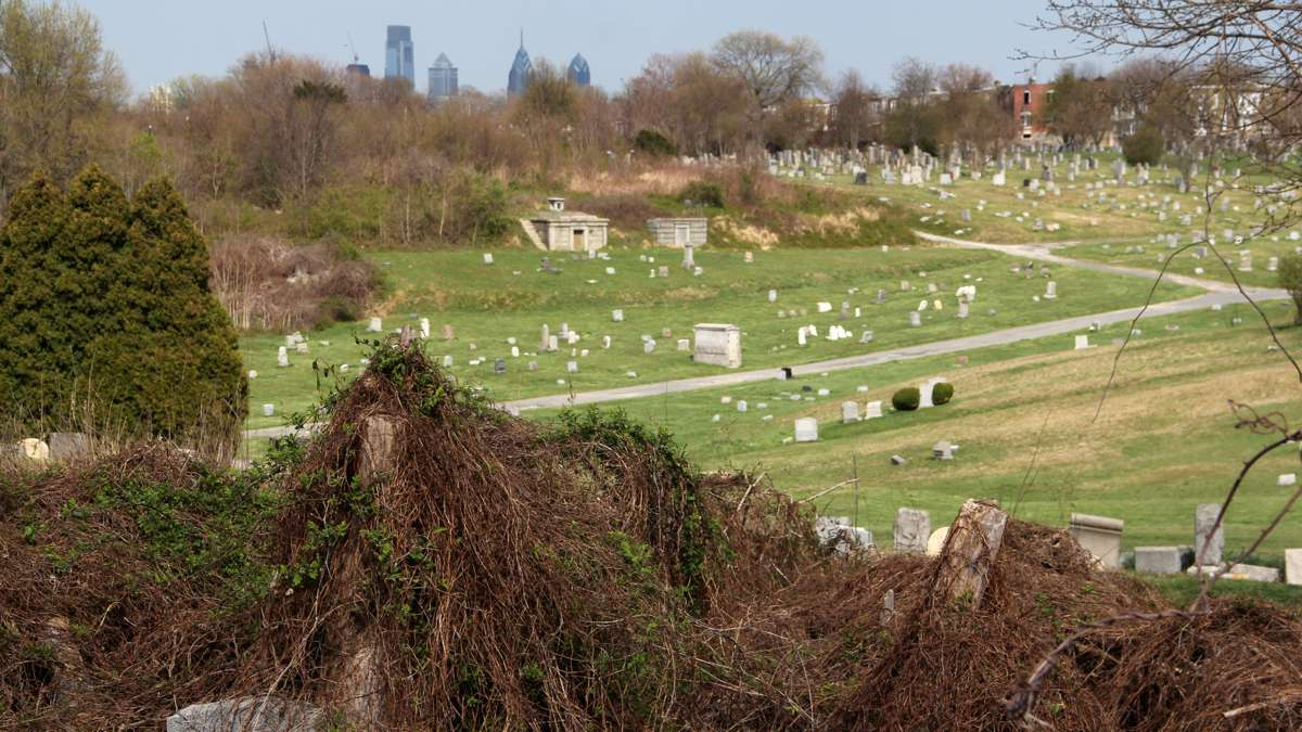 Mount Moriah covers 380 acres in Philadelphia and the bordering Borough of Yeadon, making it the largest cemetery in Pennsylvania. (Emma Lee/WHYY)