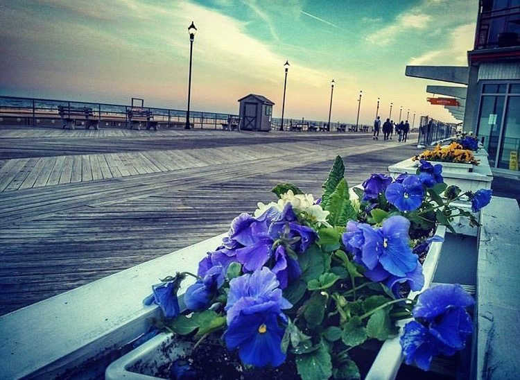 Flowers along the Asbury Park boardwalk by @visual.arguments as tagged #JSHN on Instagram.