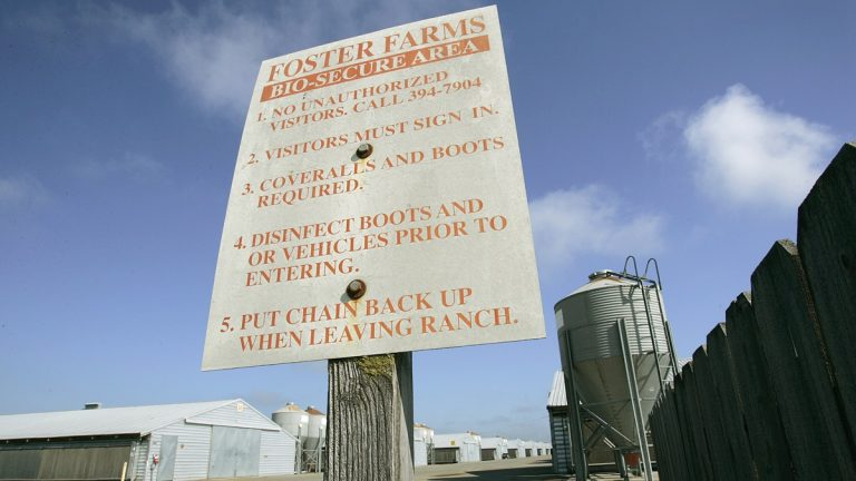 Poultry farms have posted their biosecurity rules designed to prevent the spread of avian influenza. (AP Photo/Ben Margot)