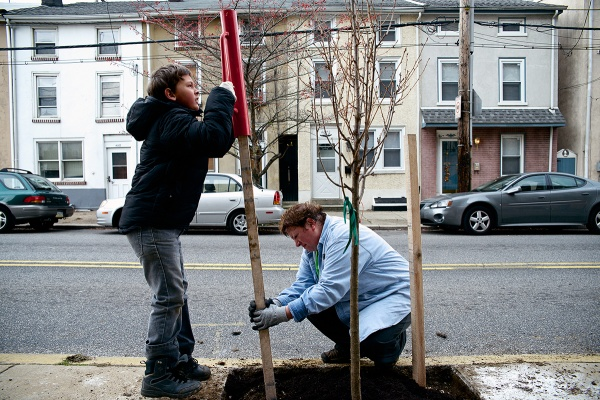 <p><p>The Roxborough-Manayunk-Wissahickon Tree Tenders have so far put in 25 trees on Umbria and Hermitage streets, and in the school's side yards, said group member Marlene Schleifer. (Bas Slabbers/for NewsWorks)</p></p>